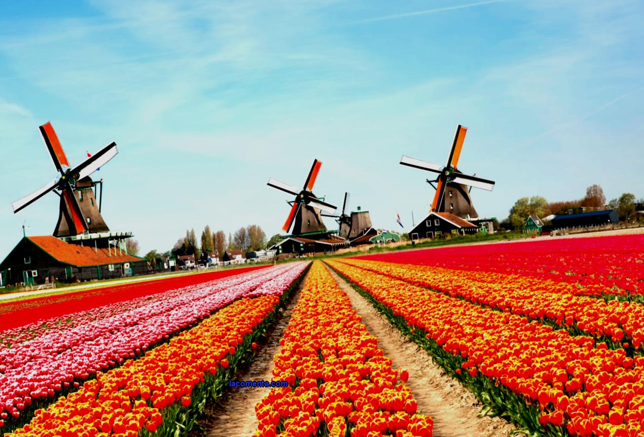 Business tourism in the netherlands