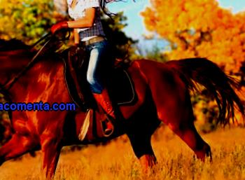 Active tourism equestrian is