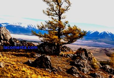 At the end of the year, the most popular Russian tourist destinations were Altai Territory and Gorny Altai