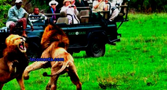 Exotic types of tourism - on a safari with a camera