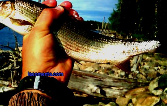 The best vacation is fishing in Karelia