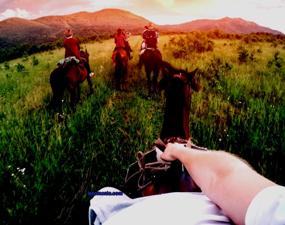 Better horseback view: how to plan your horseback tour